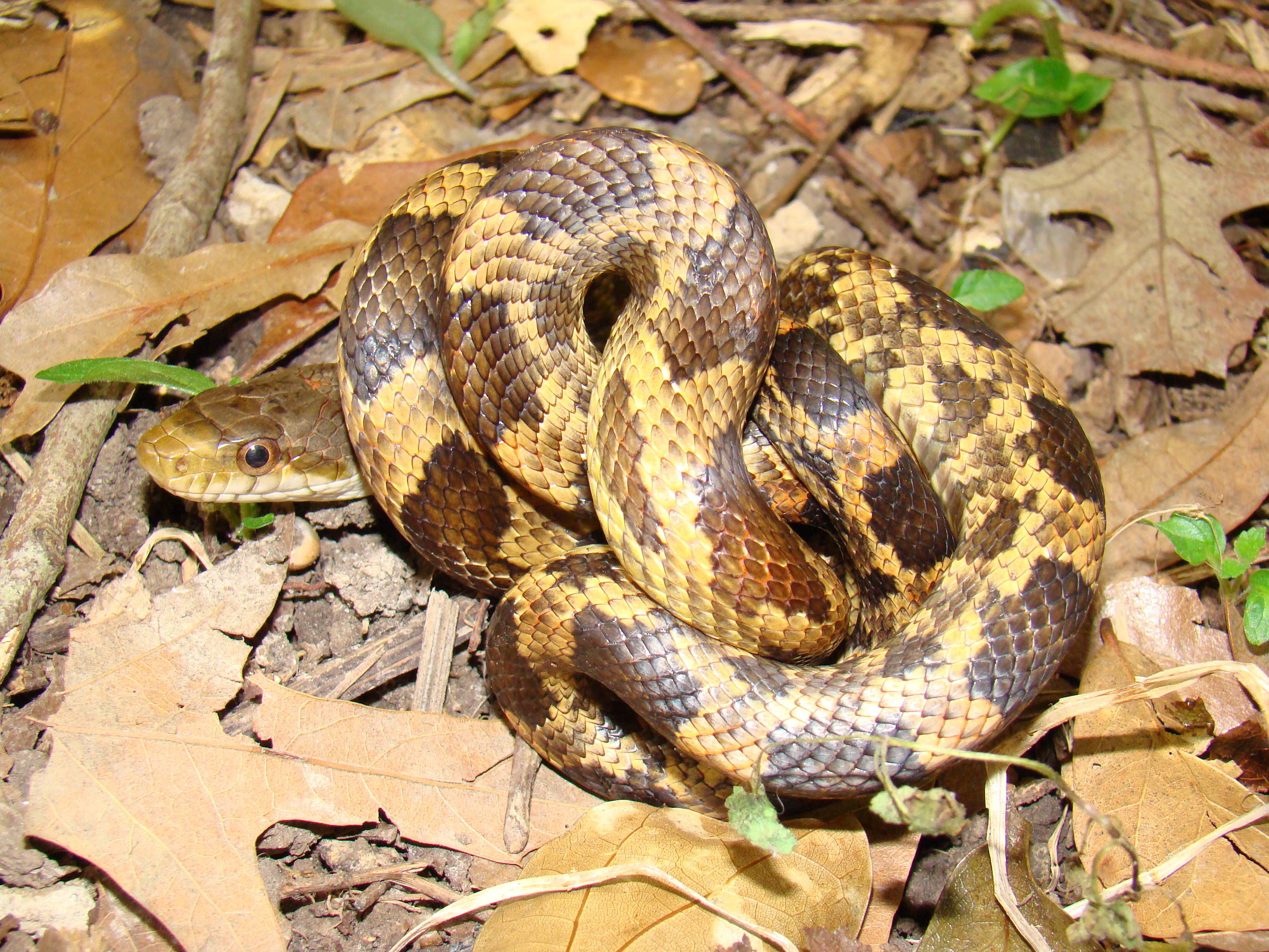 Snakes of Acadiana Park